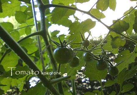Tomato_120604